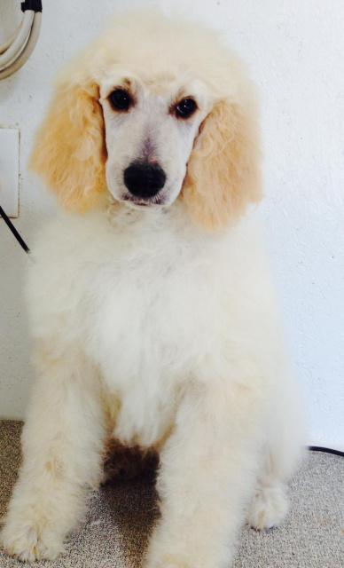 Dog Training Dutchess County Ny